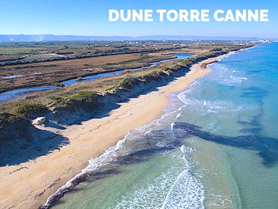 DUNE TORRE CANNE